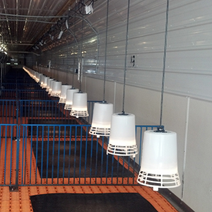 Rows of heatlamps controlled by MicroZone at HolleyHock Nursery
